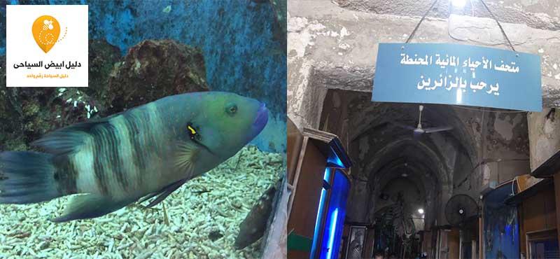 متحف الاحياء المائية الاسكندرية