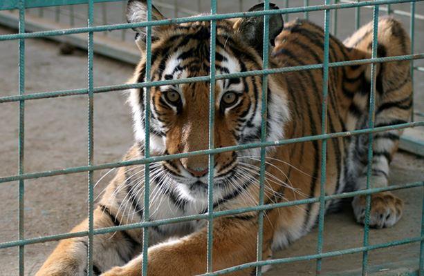 حديقة الحيوانات بالخرج