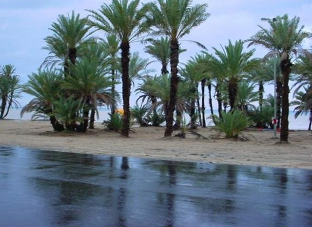 شاطئ الدقم
