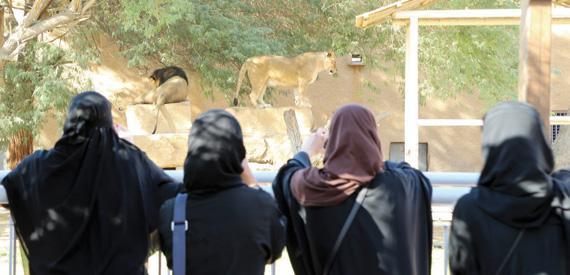أفضل 7 أنشطة في حديقة الحيوان بالرياض دليل ابيض السياحى